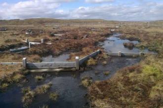 Image of timber dams on Cray Moss © Matt Cross